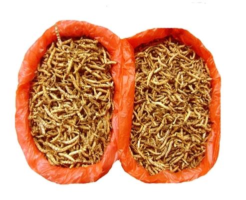 Medicina di lotserit contro un fungo di unghie